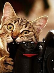 Услуги фотографа и видеооператора